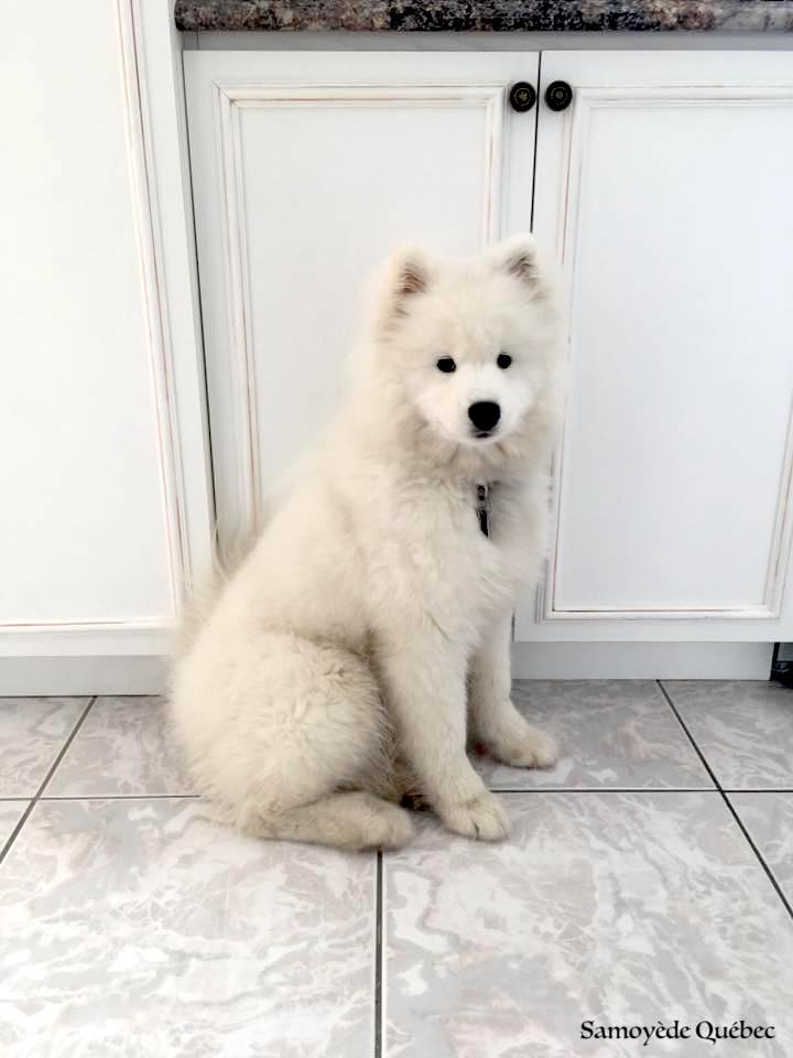Nushka - 5 mois