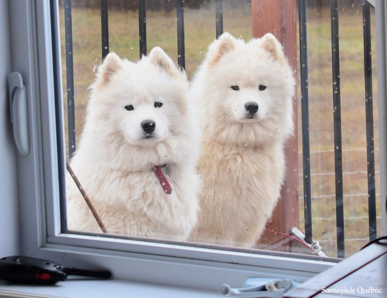 Akela and Taiga by the window