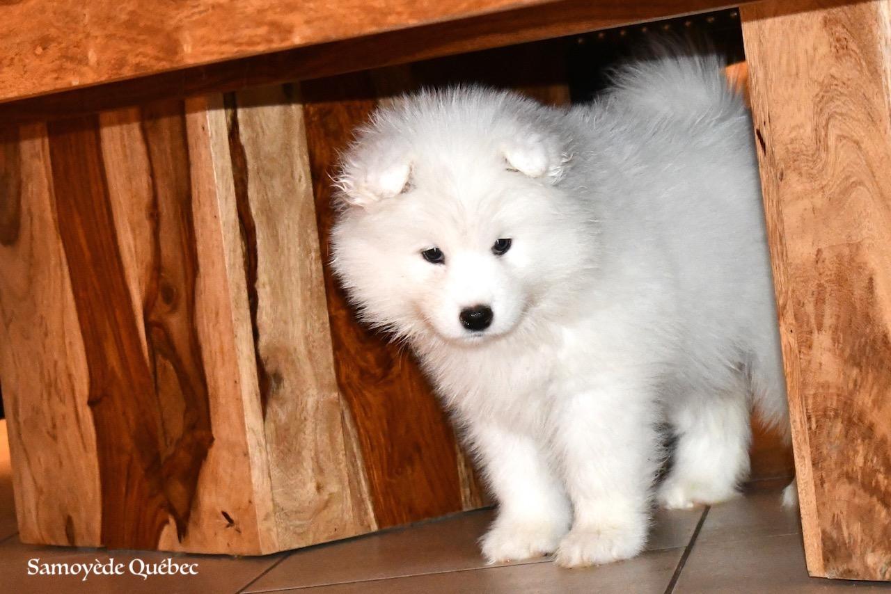 Puppy 2017