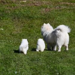 Akela et ses petits