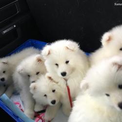 En route chez le vétérinaire