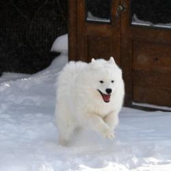 Lucky cours dans la neige