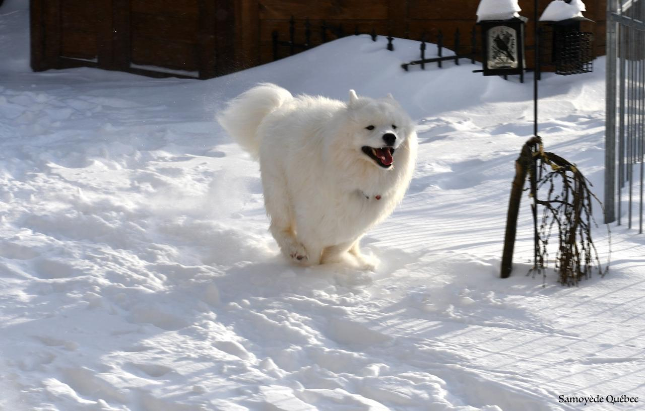 Lucky running in the snow