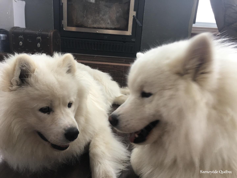 Lucky et Balto jouent ensemble