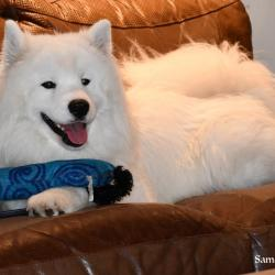 Lucky qui relaxe sur le divan