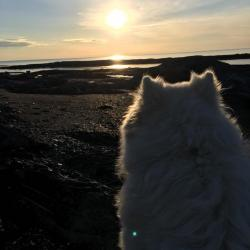 Luna admire le coucher de soleil