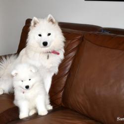 Nushka avec papa et maman