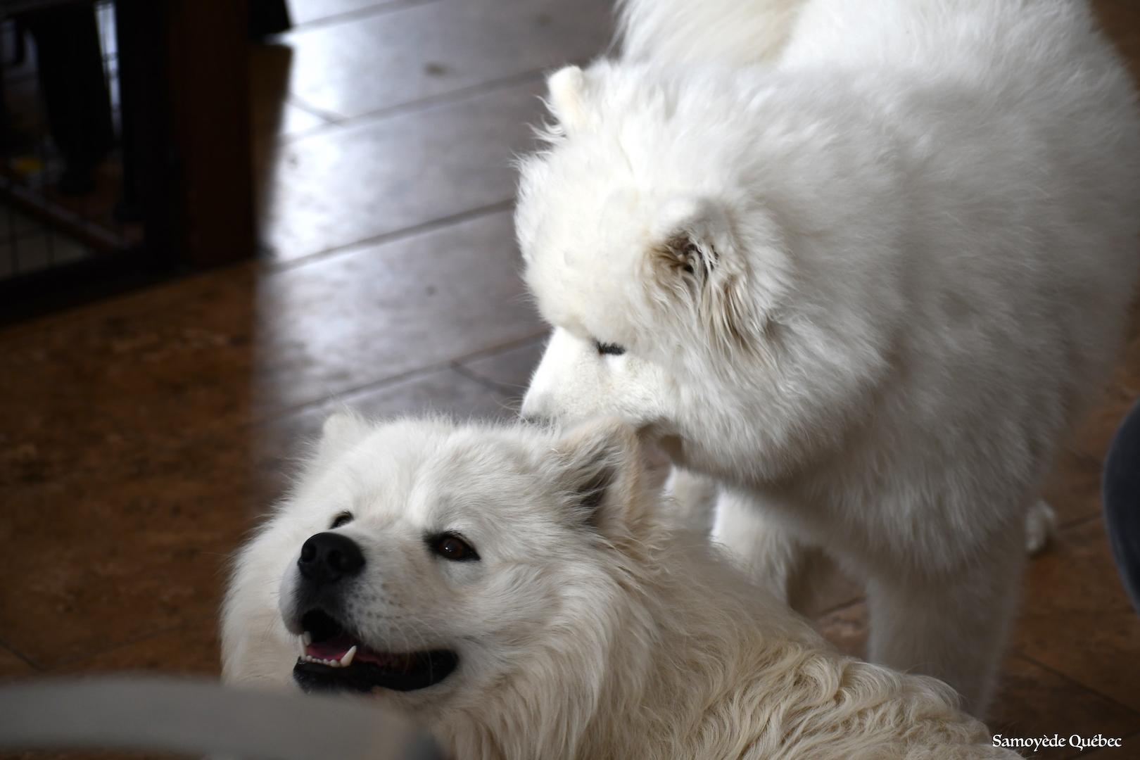 Nushka et Balto