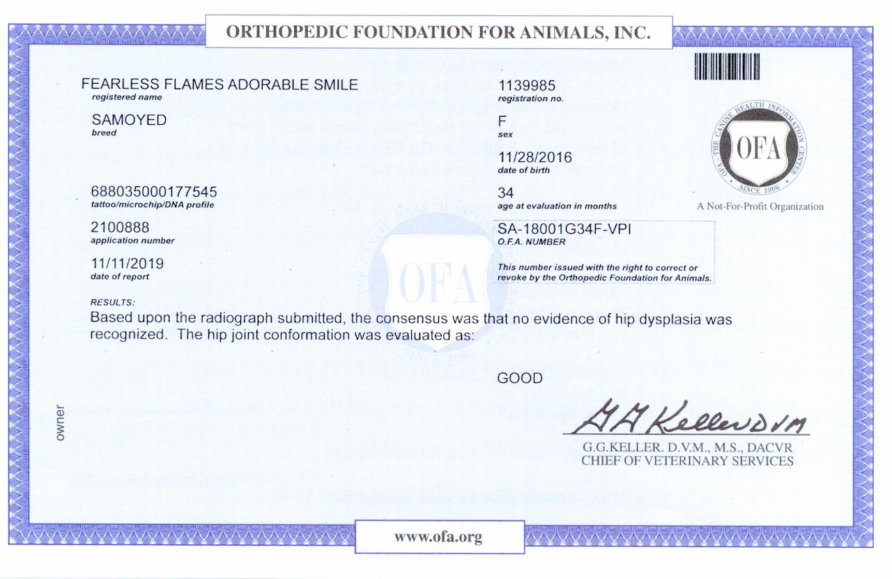 Certification OFA Hips Akela