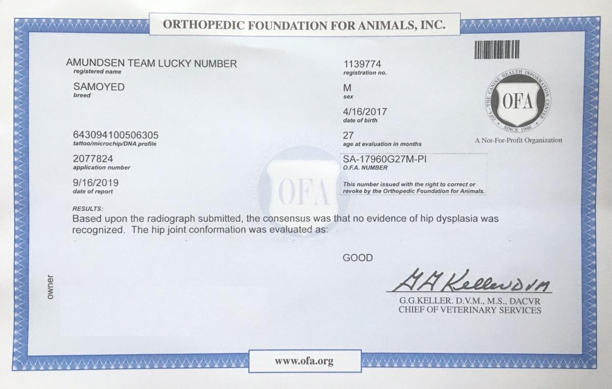 Certification hanche Balto